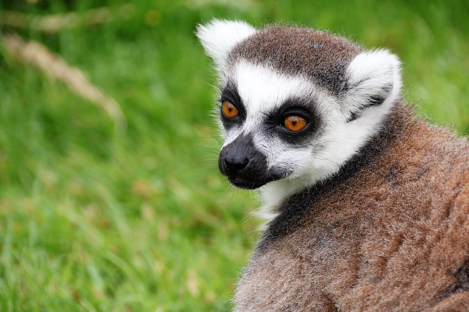 Vacances d'hiver: pourquoi opter pour un voyage à Madagascar?