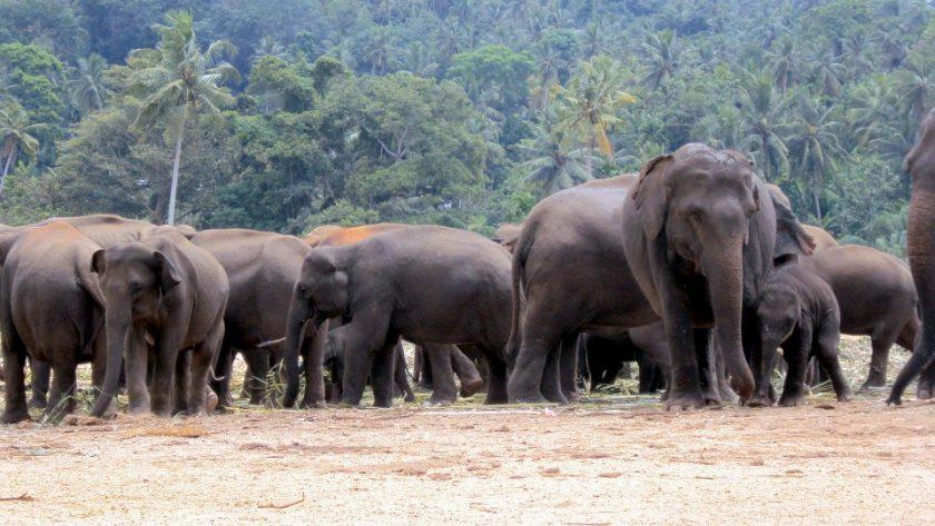 Parcourir le sud-est de l'Inde lors d'un voyage au Sri Lanka
